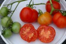 normale tomaten